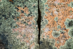 Rock abstract of lichen, Pelican Rapids, Alberta, Canada