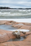 Washed up wood along the point overlooking the Pelican Rapids, Alberta, Canada