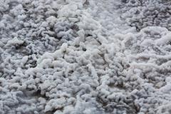 A close up of salt on the salt plains, Wood Buffalo National Park, Alberta, Canada