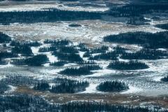 Forest islands on the grassland, Wood Buffalo National Park, Alberta, Canada