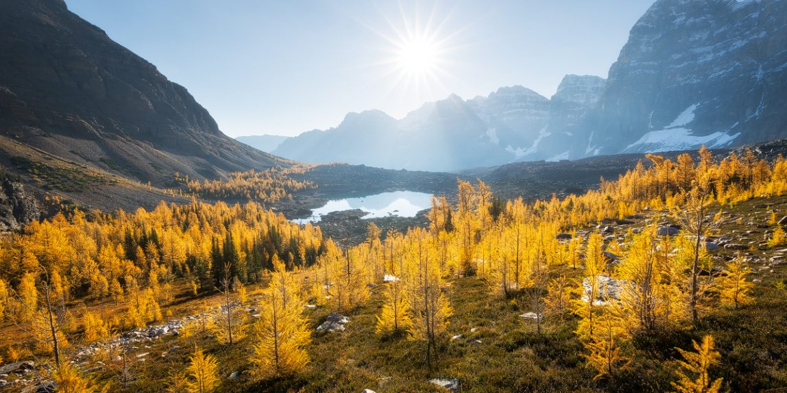Eiffel Lake and some golden alpine larches on a sunny fall morning in the Valley of the Ten Peaks, Banff National Park, Alberta, Canada
