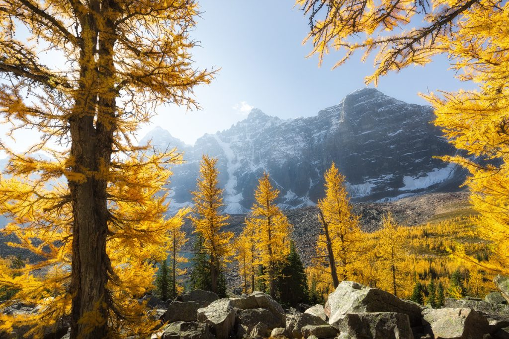 Fall color and sunshine in the valley of the 10 peaks in Banff National Park