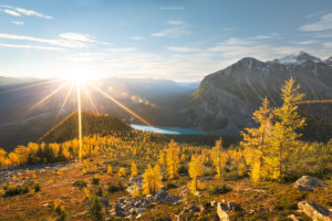 Sunlight and alpine larch trees above Lake Louise in Banff National Park.