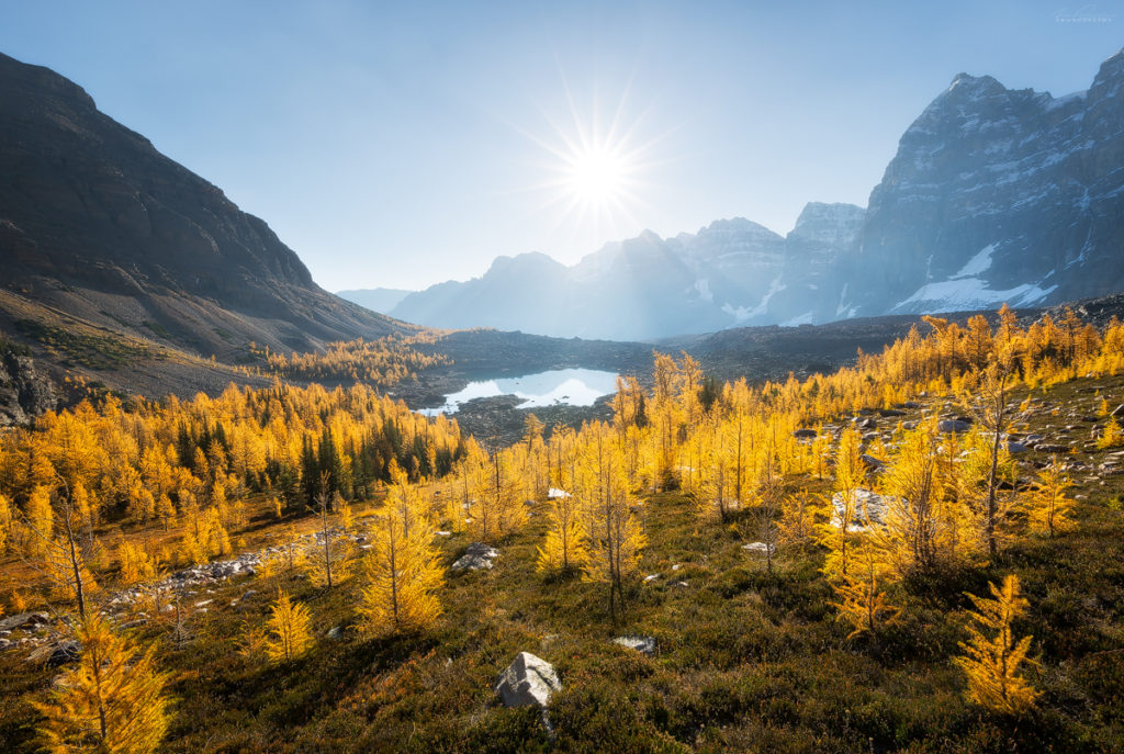 Eiffel Lake and sunshine on golden larch trees in the valley of the ten peaks, banff national park