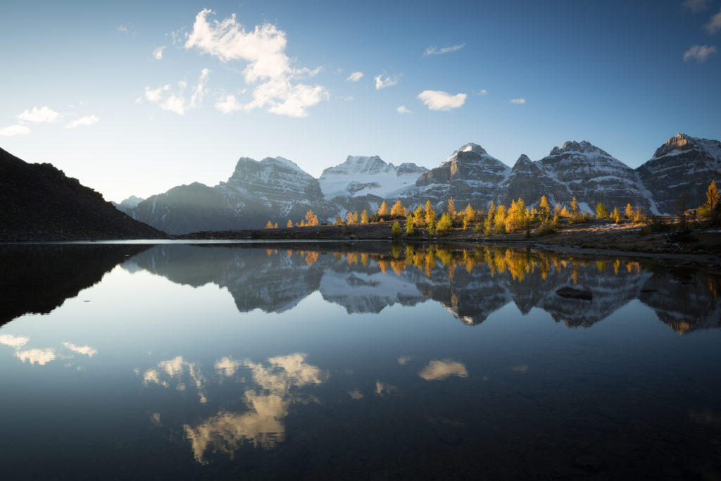 Fall trees lit by sunshine in larch valley with a reflection of the 10 peaks behind, banff national park