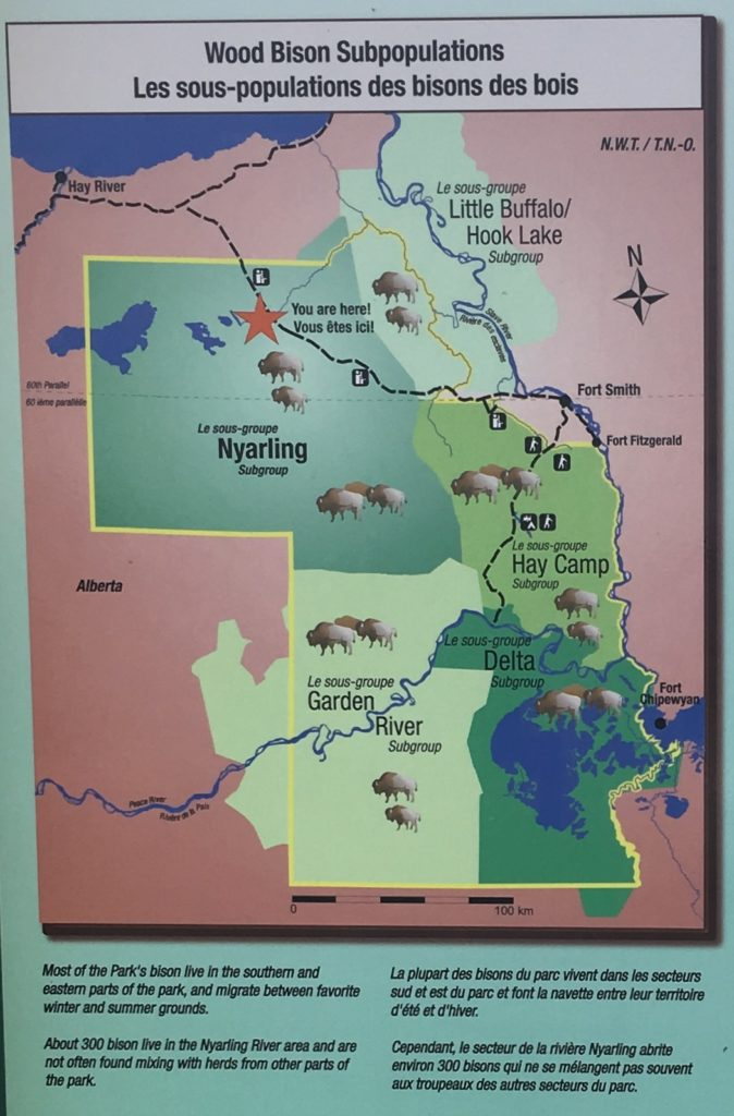 Bison sub population groups in Wood Buffalo National Park, Alberta, Canada