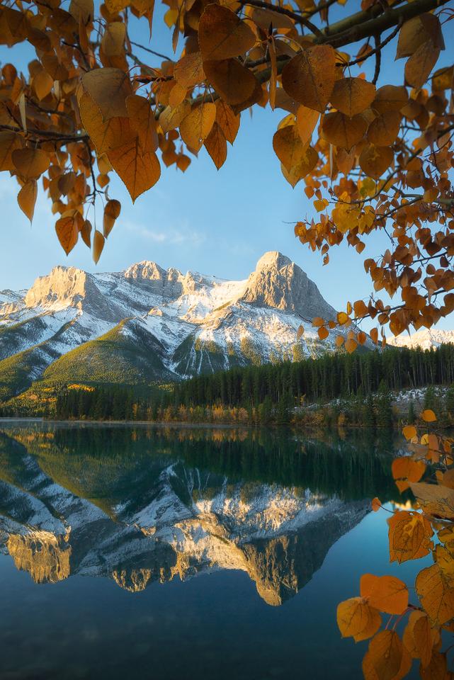 Fall leaves frame Ha ling Peak in Canmore at sunrise, Alberta, Canada