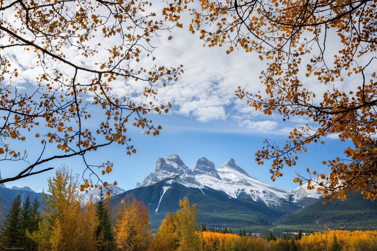 Trembling aspens framing the three sisters mountains in Canmore from near the alpine club of canada clubhouse