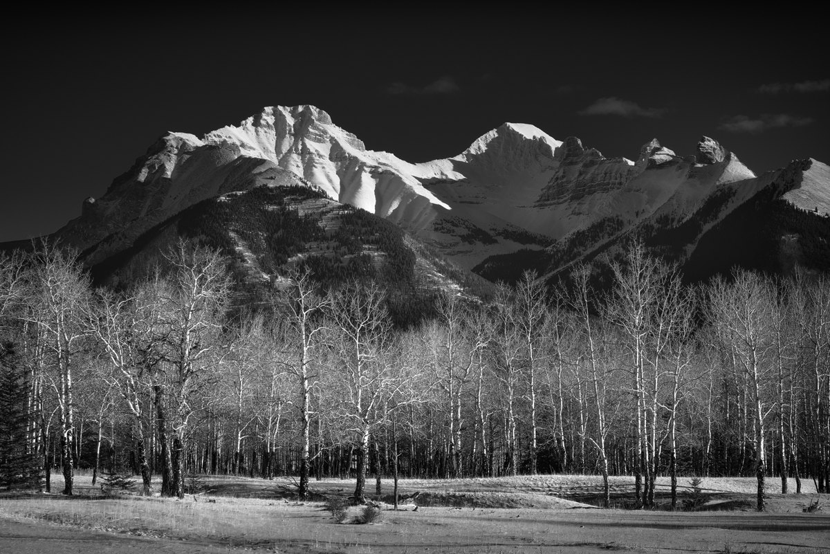 A black and white image of trembling aspens beneath the Fairholme Range in Banff National Park, Alberta, Canada