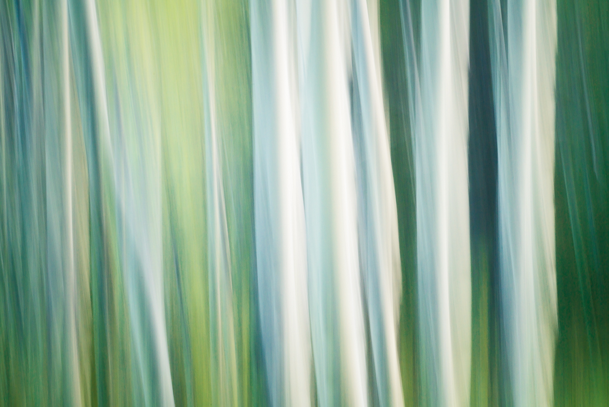 An intentional camera movement photo from the trembling aspens near fireside picnic area in Banff National Park