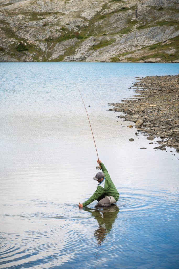 Fly fisherman picking up golden trout from the lake after landing it, Alberta, Canada