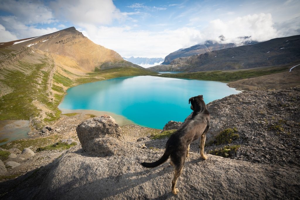 Carl the puppy looking down on Michelle lakes from a rocky outcropping, Alberta, Canada