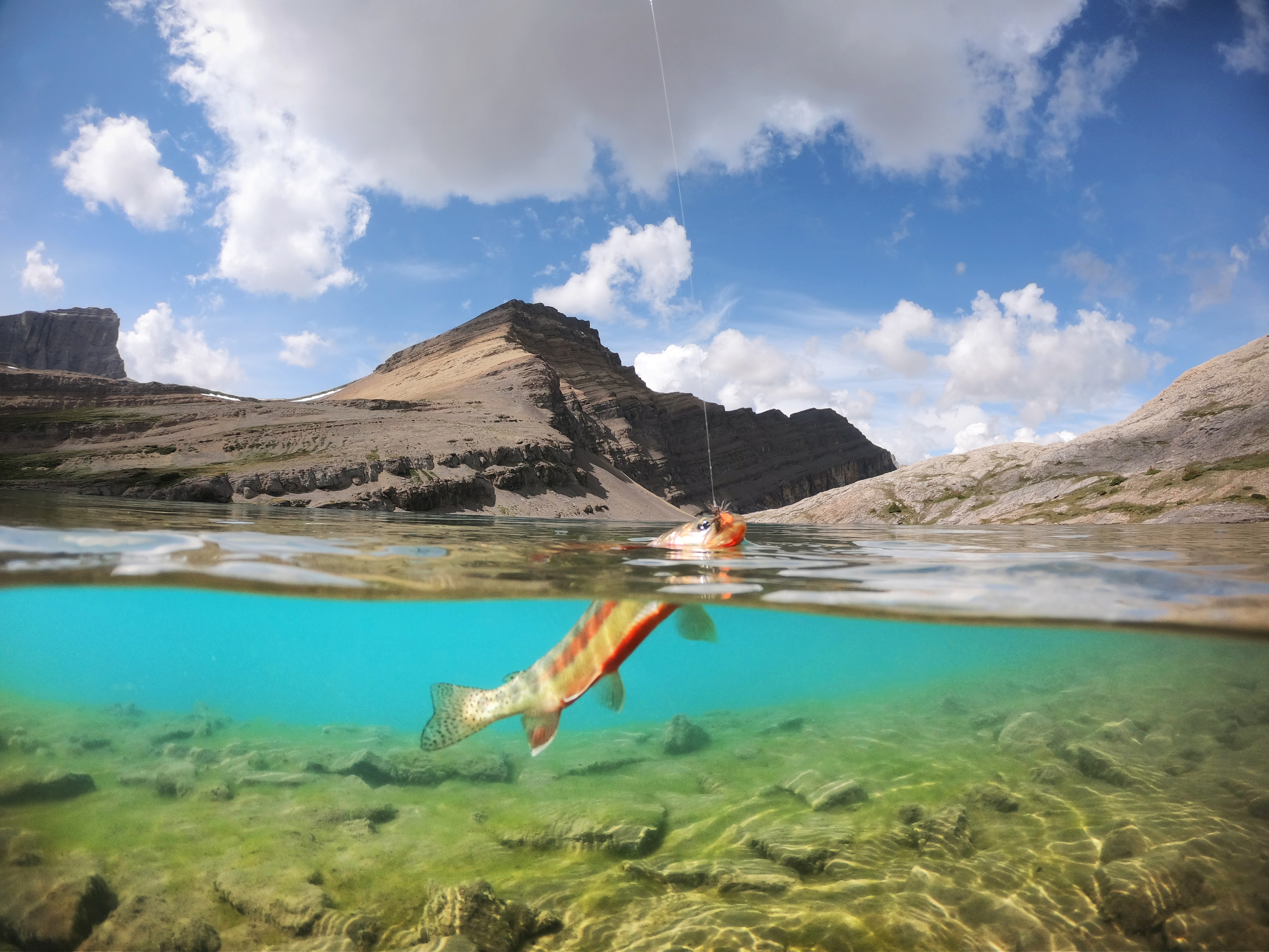 An underwater overwater split view of a golden trout on the hook at Lower Michelle Lakes, Alberta, Canada