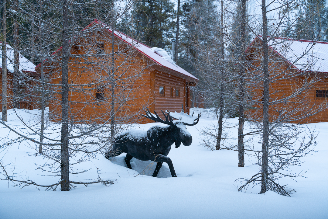A sculpture of a moose walking through deep snow among the Bake Creek mountain Resort cabins.